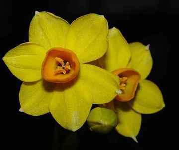 Pflanzzeit jetzt blumenzwiebeln für frühlingsblumen pflanzen