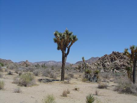 yucca ist die beste palme hier die richtigen pflegetipps die gartenoase. Black Bedroom Furniture Sets. Home Design Ideas