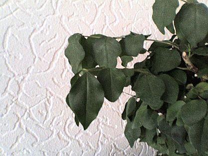 sterbender bonsai h ngende bl tter die gartenoase. Black Bedroom Furniture Sets. Home Design Ideas