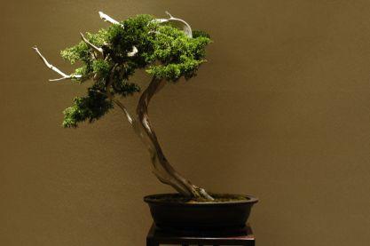 bonsai pflege die gartenoase. Black Bedroom Furniture Sets. Home Design Ideas