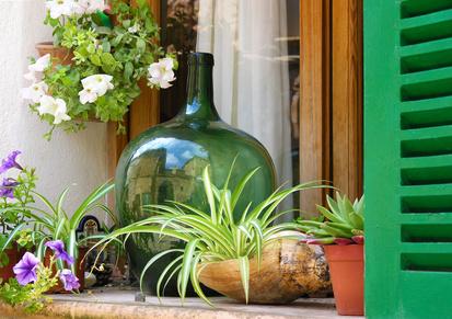 Gärtnern im Wohnzimmer: Einen Flaschengarten anlegen