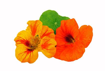 Artikelgebend sind essbare Blüten.