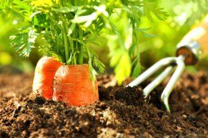 Wie ich mir im Garten helfen lasse – Nützlinge und andere kleine Helfer