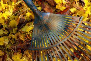 Inhalt des Artikels ist die Verwendung von Herbstlaub.
