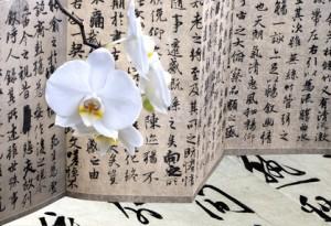Artikelgebend sind die wunderschönen Orchideen.