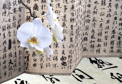die wunderschöne Orchideen.