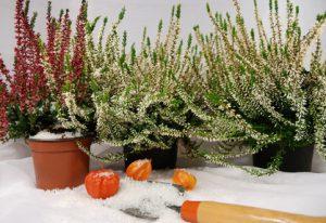 Der Artikel gibt Tipps für die Gestaltung im Winter.