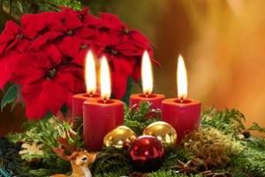 So macht der Weihnachtsstern Freude