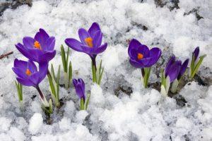 Der Artikel nennt Pflanzen die auch im Winter blühen.