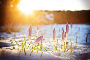 Pflanzen im Winter
