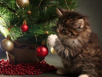 Katze am Weihnachtsbaum