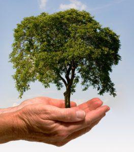 Der Baum – Ein hölzerner Fels in der Brandung des Lebens