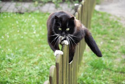 Artikelgebend sind Katzen und Vögel im Garten.