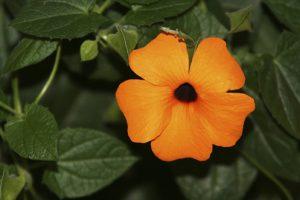 Der Artikel empfiehlt Kletterpflanzen statt Zaun.