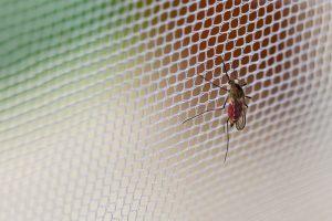 Insektenschutzgitter