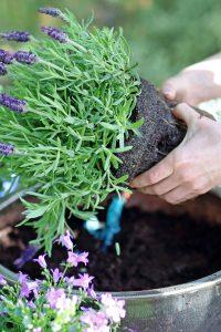 Mit der richtigen Pflege gedeihen Kübelpflanzen auf jedem Balkon. Gut für das Pflanzenwachstum sind etwa Pflege- und Düngeprodukte mit effektiven Mikroorganismen. Foto: djd/www.emiko.de/Robert Prybysz-Fotolia