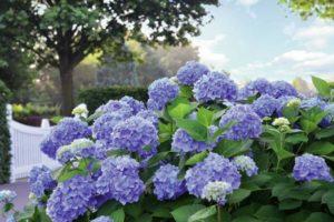 Blütenpracht fürs grüne Wohnzimmer