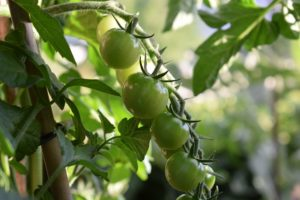 Hobbygärtner aufgepasst: Die Gartentrends 2018