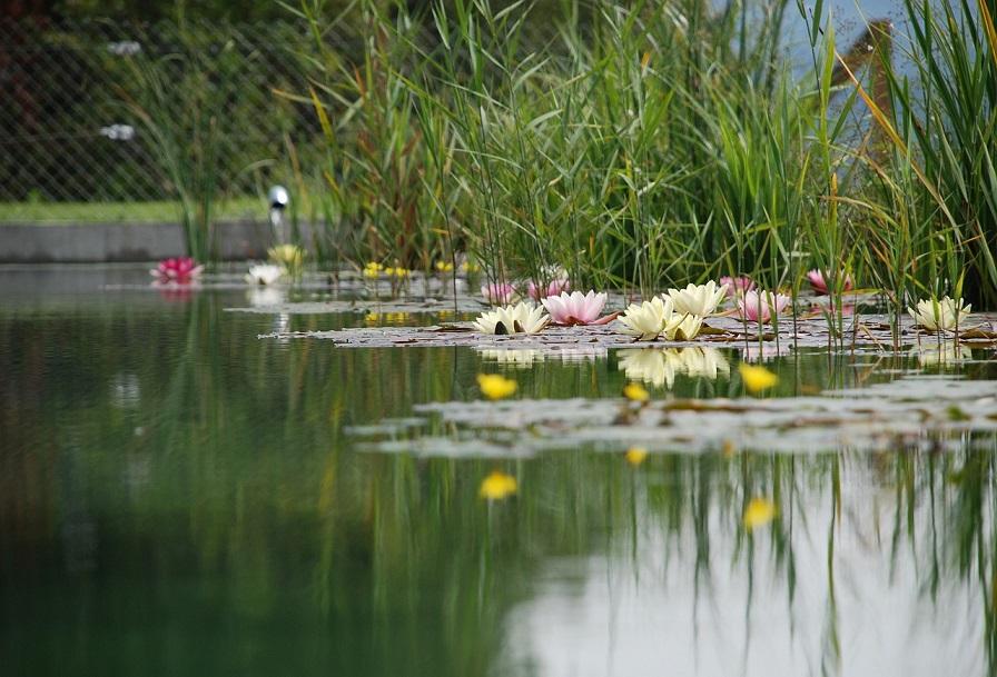 Schwimmteich – natürlicher Luxus