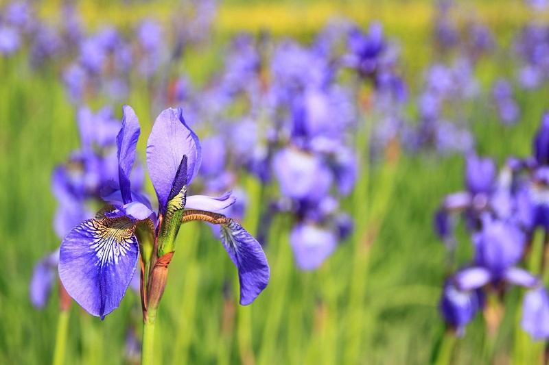 Blumen mit besonderer Bedeutung